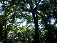 inokashira2.jpg